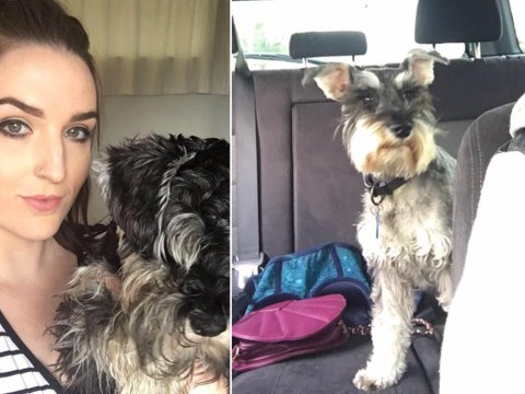 Woman thinks dog is acting strangely – realises she took wrong one home from day care