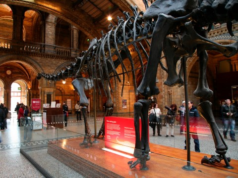Dippy the Diplodocus to go on national tour after being unleashed