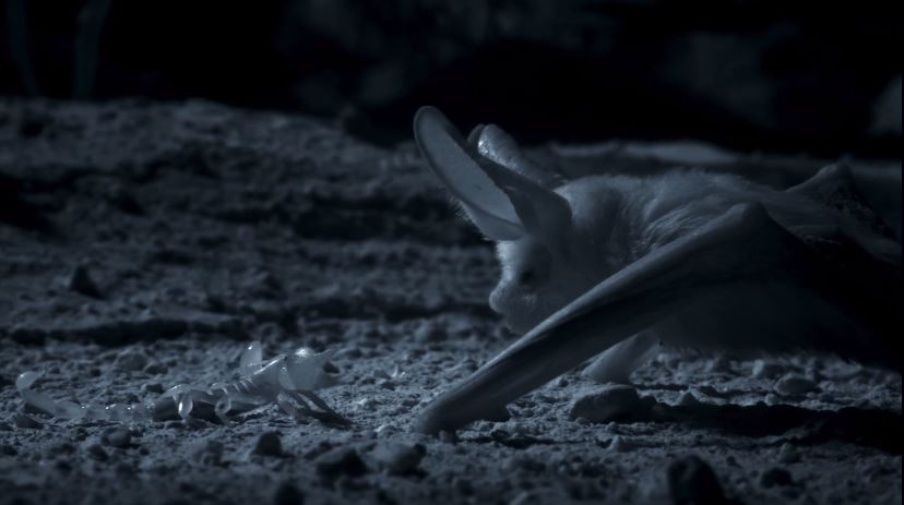 Bat V Scorpion was a new Planet Earth best (Picture: BBC)