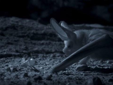 Planet Earth II's Bat V Scorpion was way better than Batman V Superman, according to viewers