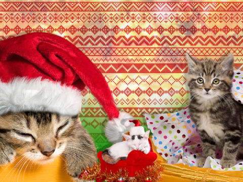 19 things all cat owners can relate to at Christmas