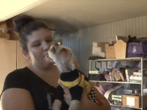 This dog was lost for nine years and has finally been reunited with its owners