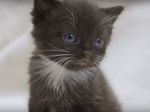 This cat meditation video will help you stay calm while the world potentially falls apart