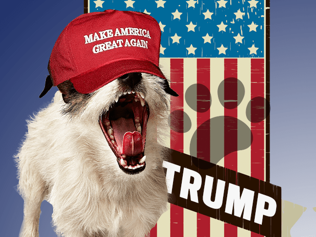 Dogs are taking direct action to influence the US election