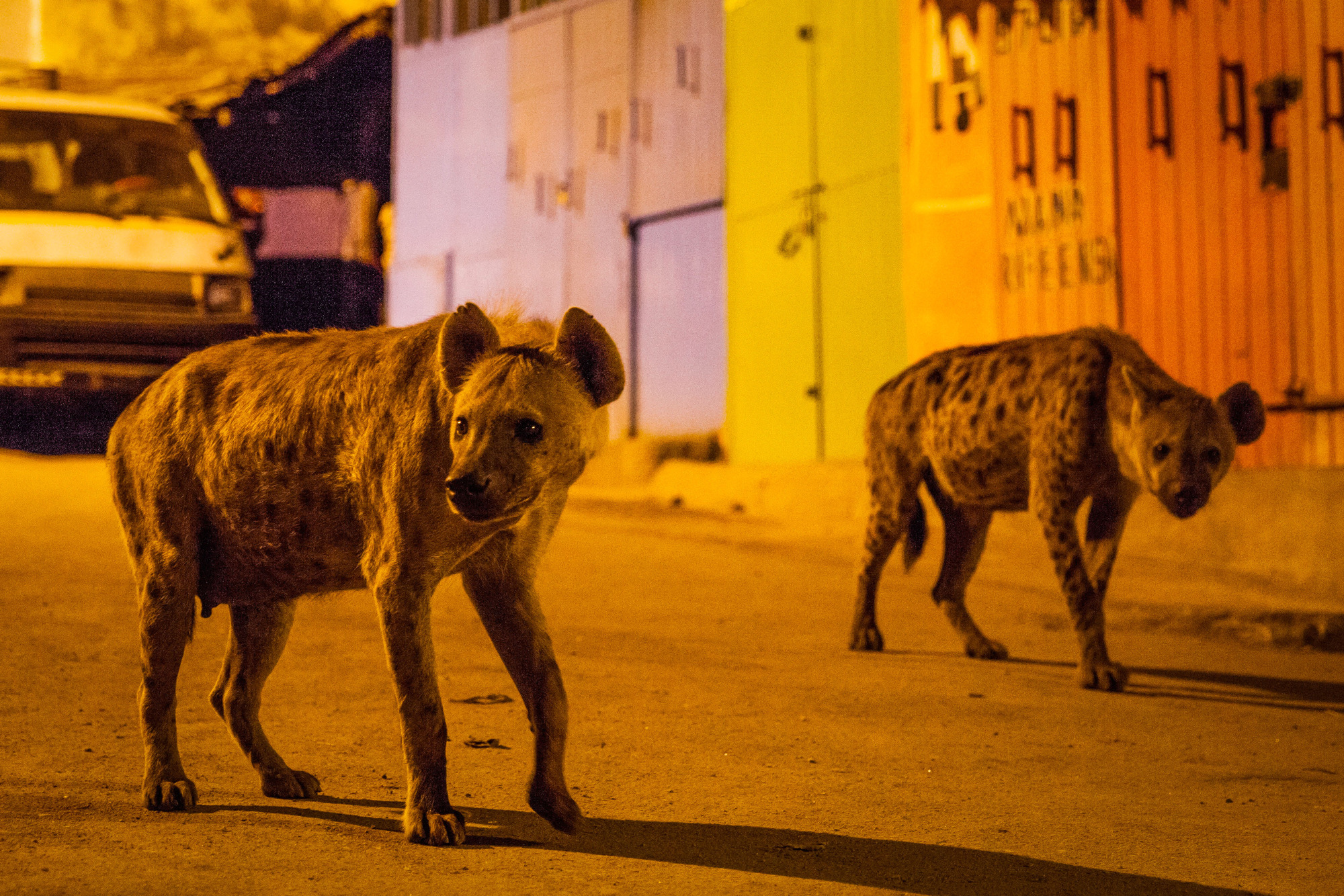 Planet Earth 2 producers reveal terrifying moment they got caught in hyena 'gangland war'