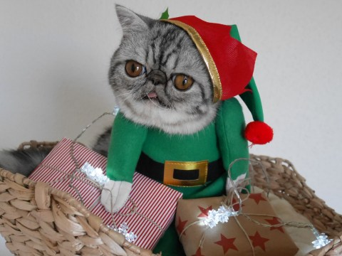It's Herman the scaredy cat's first Christmas – but he couldn't look less happy about it