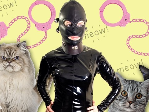 Apparently cat owners might be more into bondage and BDSM than everyone else