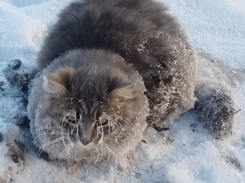 Lucky escape for cat who got stuck in a frozen puddle