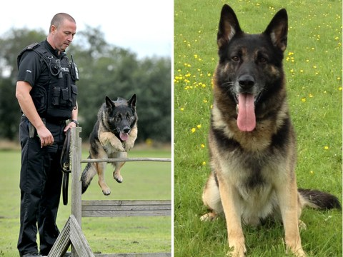 Police dog who helped in 170 arrests dies in his handler's arms