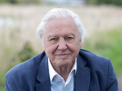 Yep, that's David Attenborough starring in a new music video