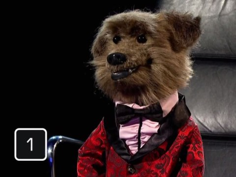 Hacker T Dog almost won Celebrity Mastermind and everyone's fallen in love with him