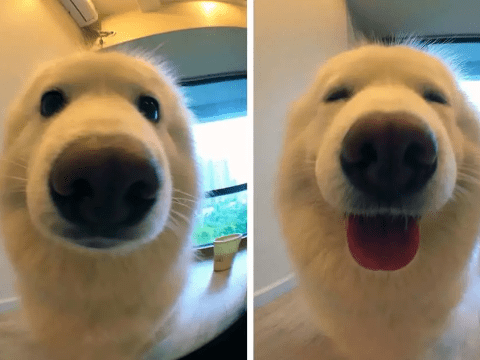 People are posting pictures of their pets before and after being called 'a good boy'