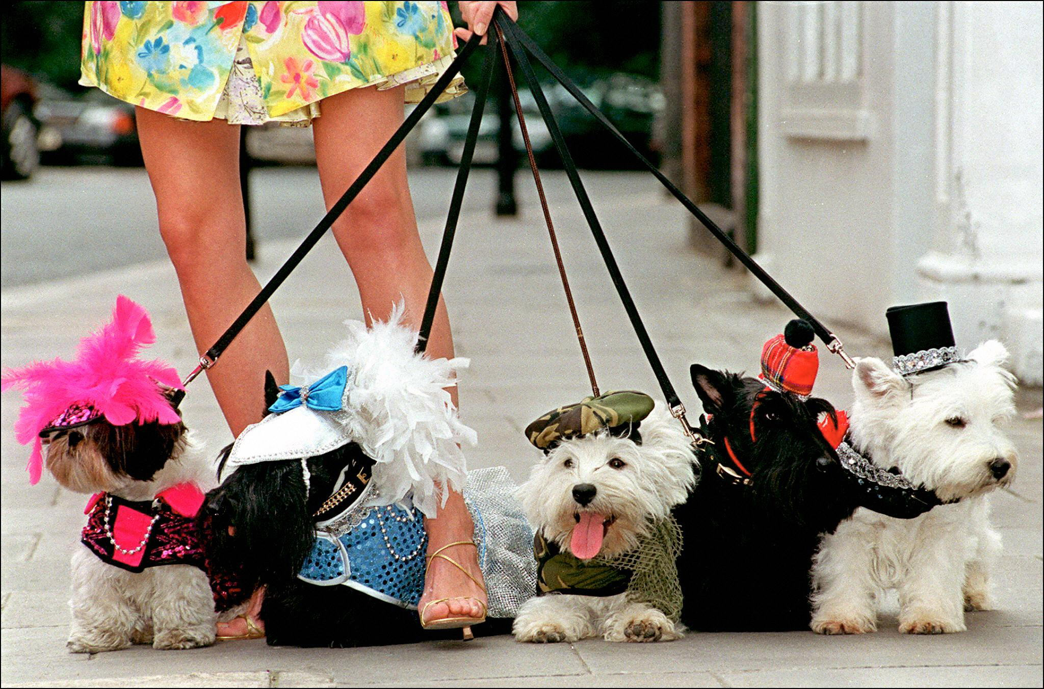 National Dress Up Your Pet Day: Here are some truly adorable ones