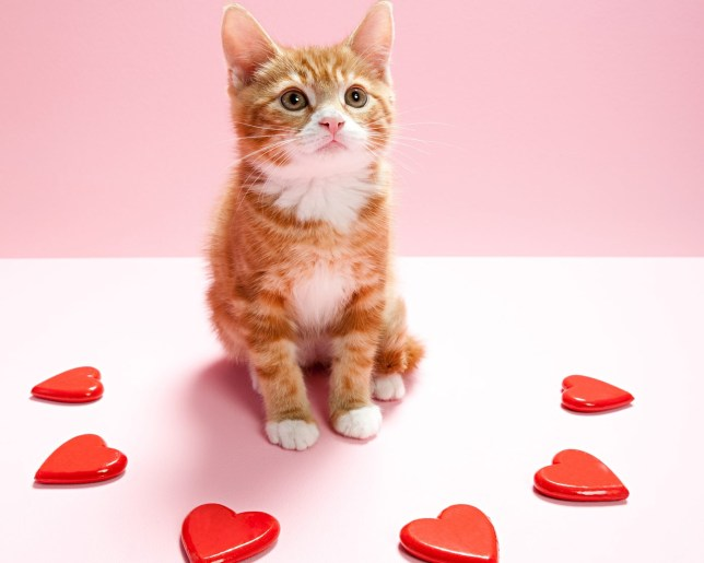 Kitten and heart shapes