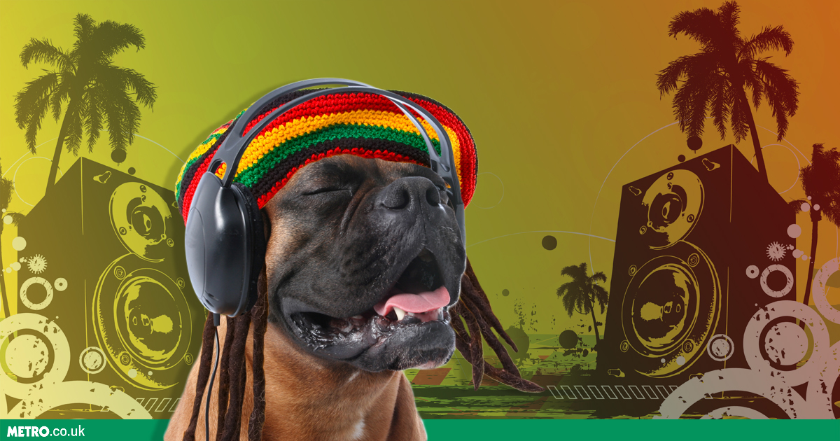 Dogs are most relaxed when listening to reggae
