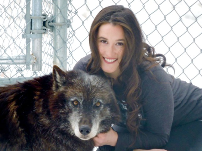 PIC FROM MERCURY PRESS (PICTURED: SARAH VARLEY, 28, WITH ONE OF THE WOLVES) A rape survivor whose crippling vomit and germ phobia saw her weight drop to just 6st 7lbs credits a WOLF PACK with saving her life. Sarah Varley became so terrified of sick she would only eat three raisins and three walnuts each morning after developed post-traumatic stress disorder (PTSD) when she was raped as a 19-year-old. The 28-year-old, lost 2st 5lbs in five months and feared she would die as the phobia took hold ñ but was healed by spending eight hours a day with a pack of wild wolves and mixed-species wolf dogs. SEE MERCURY COPY