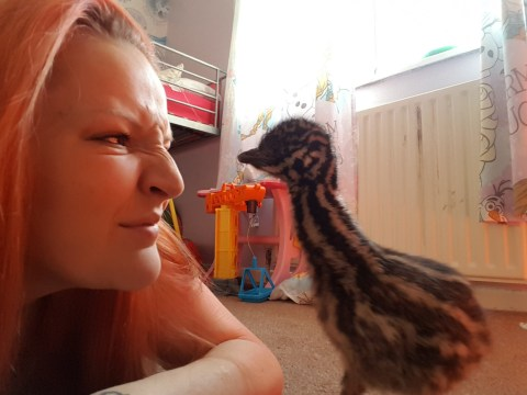 Mum who was bought an egg for £25 off eBay now has an emu