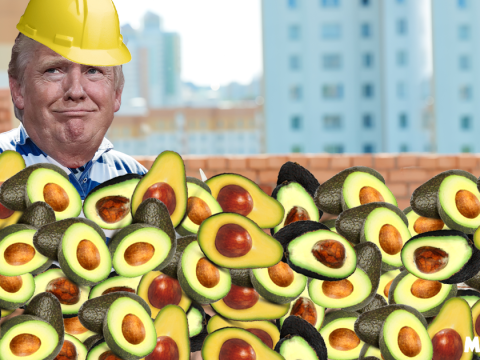 US needs to buy billions of avocados to pay for Mexico wall