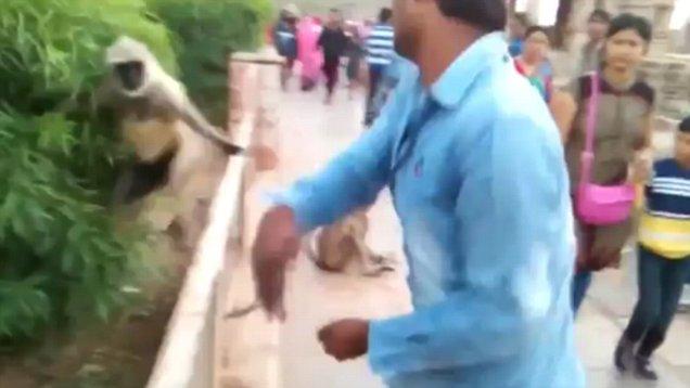 Sickening footage shows man slap monkey after offering it food