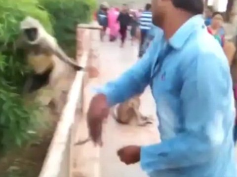 Sickening footage shows man slap monkey after offering it food