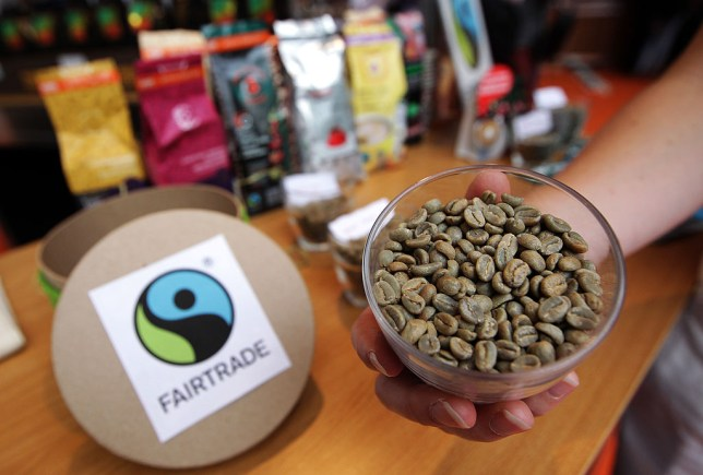 """A person shows unroasted fairtrade coffee beans during the exhibition """"World of coffee"""", on June 27, 2013, in Nice, southeastern France. AFP PHOTO / JEAN CHRISTOPHE MAGNENET (Photo credit should read JEAN-CHRISTOPHE MAGNENET/AFP/Getty Images)"""