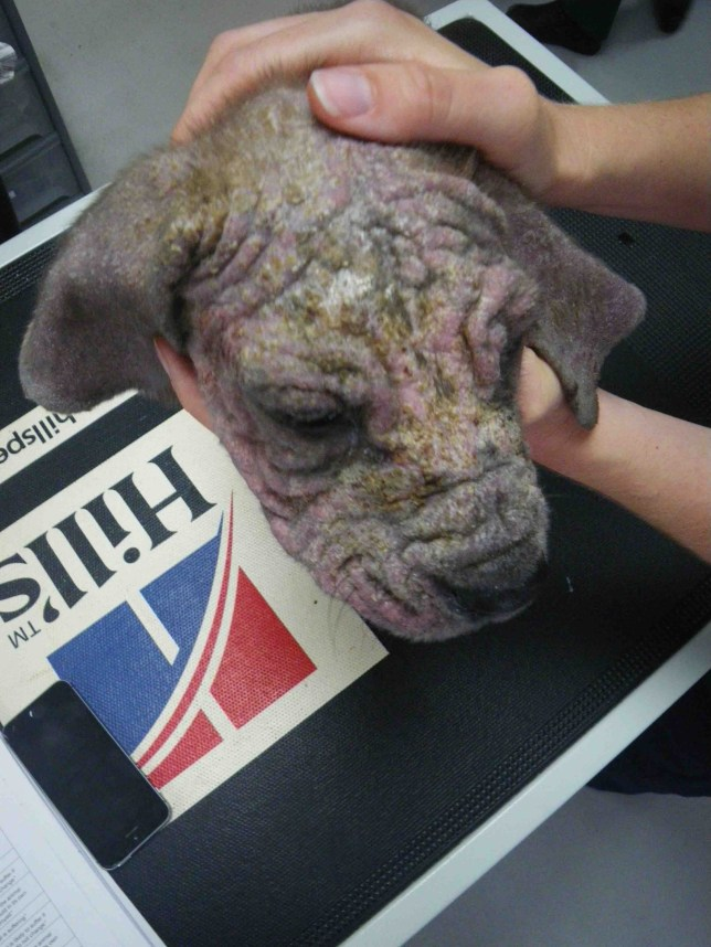 A 39-year0old grandmother who left her animals in an appalling state of neglect was caught out by her Facebook profile picture.nOfficials found three Serbian Mastiffs suffering at the Middlesbrough home of mum-of-five Leanne Fallow.nTheir fur had fallen out and their skin turned red raw, a condition so agonising they began to bite their own flesh.nShe¿s now been banned from keeping animals for five years following an RSPCA investigation, launched after a good samaritan ¿ initially dubbed ¿bitter¿ ¿ raised concerns after trying to rescue the puppies.n¿Two vets have certified that animals in this case have been suffering substantially,¿ said John Ellwood, prosecuting on behalf of the RSPCA.nnA woman from Middlesbrough is due in court this afternoon for sentencing in a prosecution case brought by the RSPCA. Leanne Fallow (D.O.B 22.9.77) of The Greenway is scheduled to appear at Teesside Magistrates' Court at 2pm. She pleaded guilty to four offences of causing unnecessary suffering to two Siberian Mastiff puppies and their mother who all had chronic skin conditions at a hearing in January.