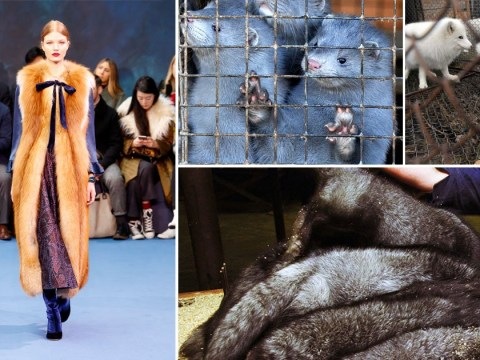 Should fur be banned from London Fashion Week?
