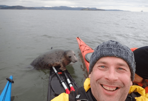 Cheeky seal hitches a lift with a kayaker and nearly sinks him