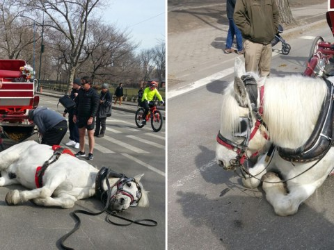 Carriage horse 'collapses' while pulling tourists through New York