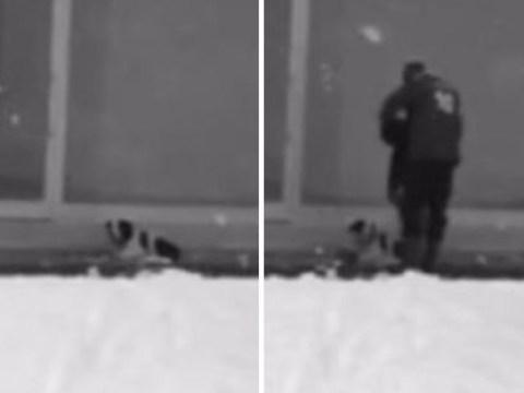 Kind man gives his jacket to stray dog left shivering in the snow