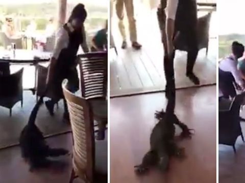 Hero waitress drags massive lizard out of restaurant by the tail