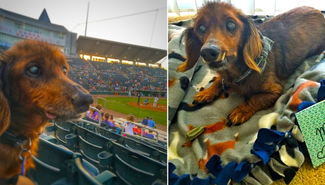 This elderly dachshund is living out his last years with an epic bucket-list