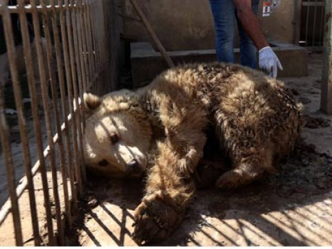 Help arrives for the only animals left at zoo captured by ISIS