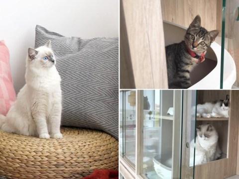 Take a look inside Nekoya, Singapore's first capsule cat hotel