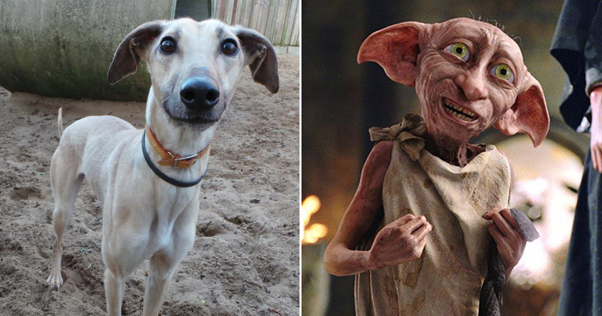 Frida (left) and Dobby the house elf (Pictures: Dogs Trust Ilfracombe/Warner Bros.)