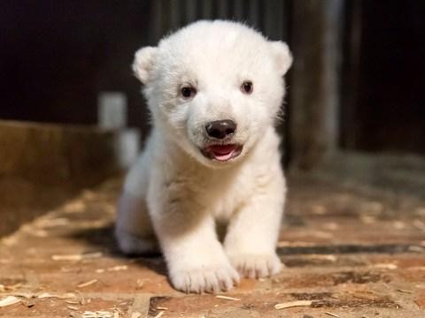Four-month old polar bear cub dies at zoo in Berlin