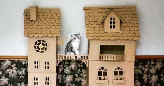 Woman Built Castle For Her Cat, Who Had Exactly The Reaction You'd Expect