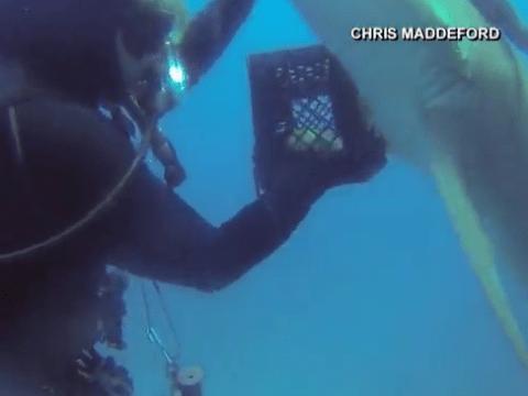 Diver lends shark a helping hand