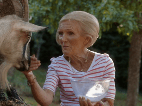 There goes the cheese! Mary Berry gets kicked by a goat as she tries to milk it on Mary Berry Everyday