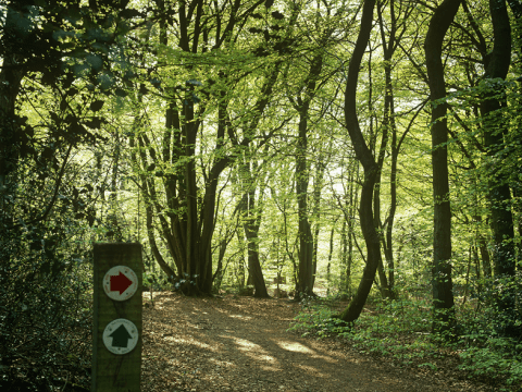 12 stunning woodlands in or near London to visit on International Day Of Forests