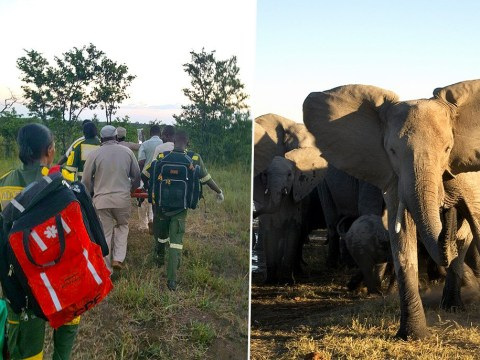 Woman killed during stampede after being impaled on elephant's tusk