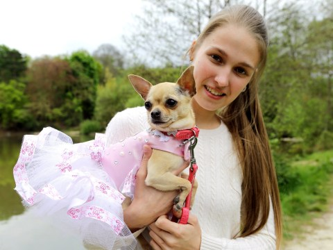 This woman has spent over £10k buying Dior and Chanel-inspired dresses for her Chihuahua