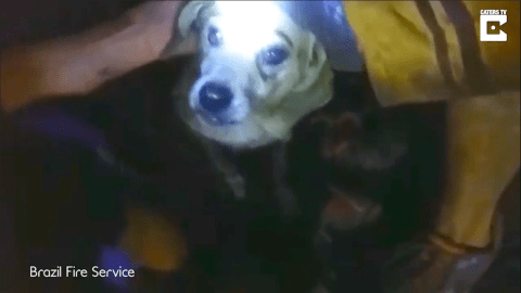 Dog survives being trapped for nine days