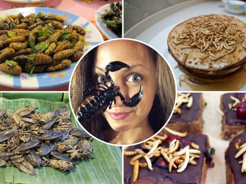'I loved the taste instantly': This woman adds insects to her meals, and thinks you should too