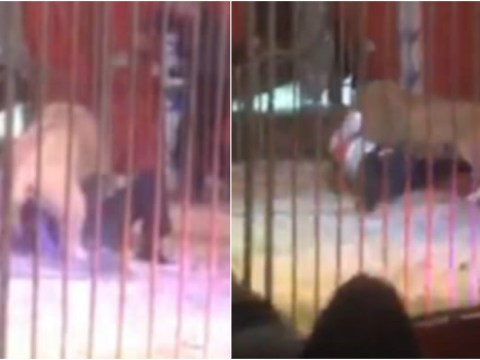 Lion filmed locking its jaw round keeper's throat during circus performance