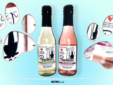 Pawsecco is here for anyone who prefers drinking with their pet to socialising