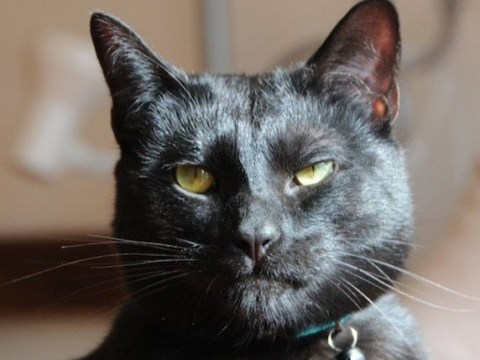 An 'utter b*****d of a cat' is looking for a new home