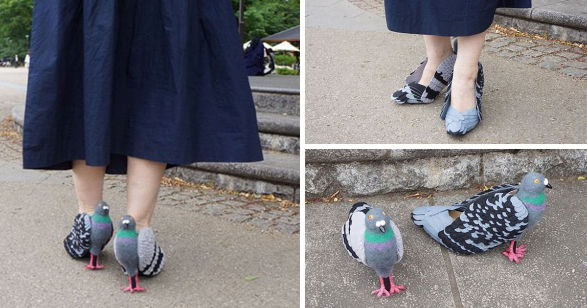 Bird lover created pigeon-shaped shoes to stop scaring them