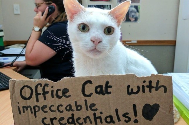 Cat Becomes Receptionist After Waiting 400 Days To Be Adopted In