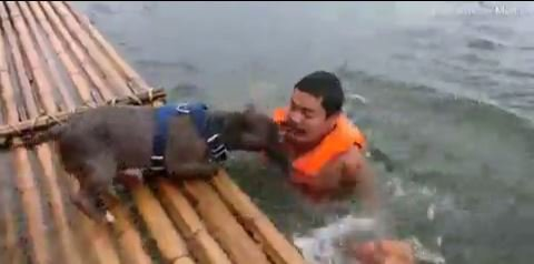Two brave dogs work together to save their owner from 'drowning'